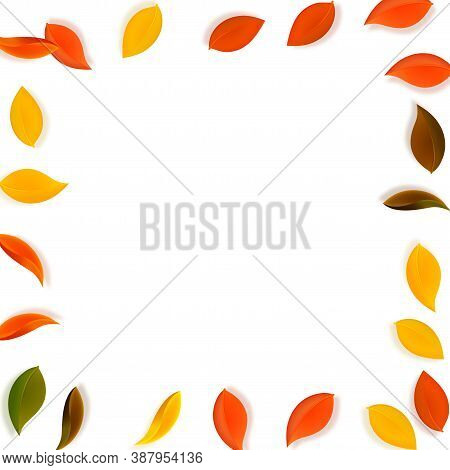 Falling Autumn Leaves. Red, Yellow, Green, Brown Neat Leaves Flying. Frame Colorful Foliage On Subli