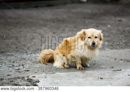Happy Dog Looking At The Camera - Shy Dog Looking At Camera