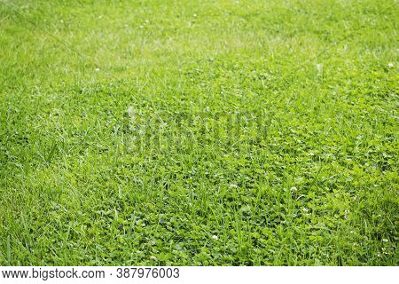 Fresh Green Grass Field For Background Photo