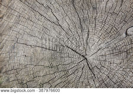 Rough Cut Of Tree Trunk For Background