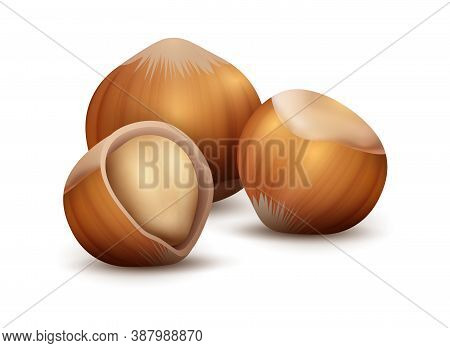 Realistic Nuts. Forest Plant Seed For Branding. 3d Hazelnut On White Background. Nutty Taste In Choc