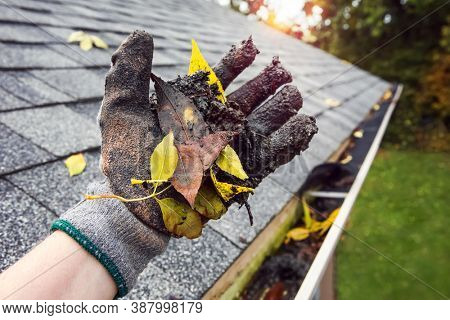 Cleaning leaves and debris out of rain gutters in autumn closeup of glove holding leaves and debris