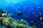 Female Scuba Diver exploring coral reef underwater