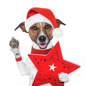 surprise christmas dog with a red present box poster
