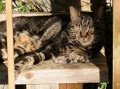Tabby cat lying in the warm sunshine relaxing poster