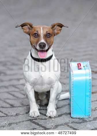 vacation dog waiting outside ready to depart with luggage poster