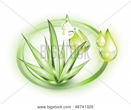 Aloe vera and extract