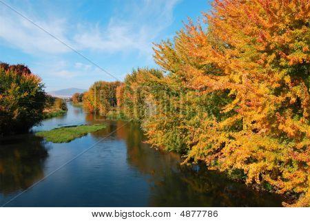 Calm River in Autumn