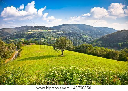 Tree on the midle of meadow , Divcibare mountain, Serbia.   poster