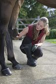Full length of a woman grooming horse's leg outdoors poster