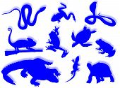 Reptiles and amphibians in different poses and attitudes poster