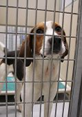 a dog in an animal shelter, waiting for a home poster