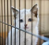 a tiny kitten in an animal shelter, waiting for a home poster