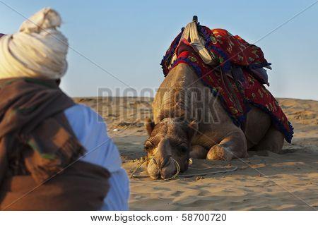 Camel JAISALMER INDIA