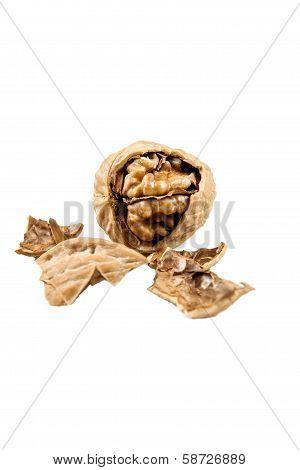 Inside The Nut