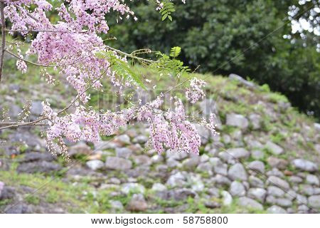 Pink Flowers on Tree