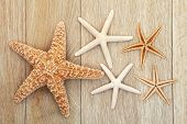 Starfish sea shell abstract over old oak background. poster