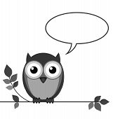 Owl talking with copy space for own text isolated on white background poster