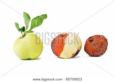 Three States Of Apple