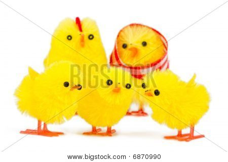 Chick Family