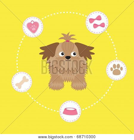 Little glamour tan Shih Tzu and dog stuff. Dash line circle. Vector illustration. poster