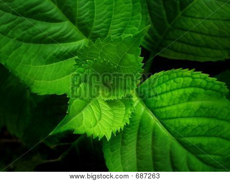 Green Leaves, Spiral Of Life