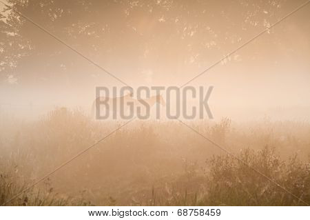 two horse silhouette in dense fog and morning sunshine poster