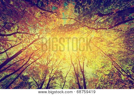 Autumn, fall trees. Sun shining through colorful leaves. Vintage photograph style