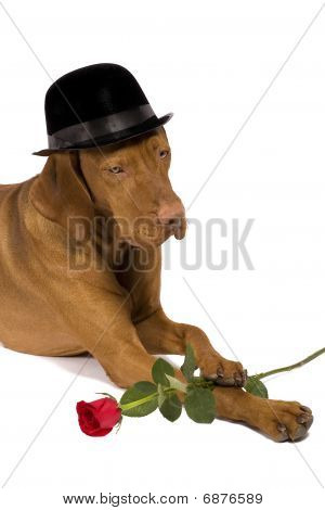 Dog With Hat And Rose