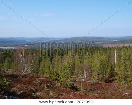 Northern forest landscape