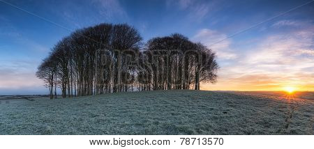 Sunrise Over Copse