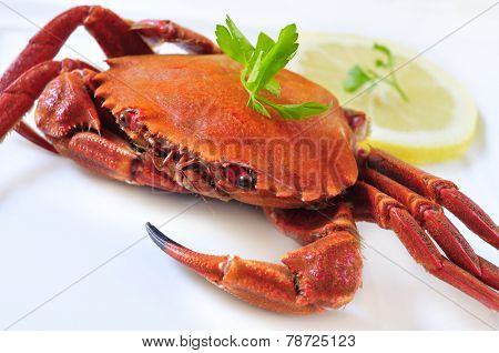 closeup of a cooked velvet crab on a white background poster
