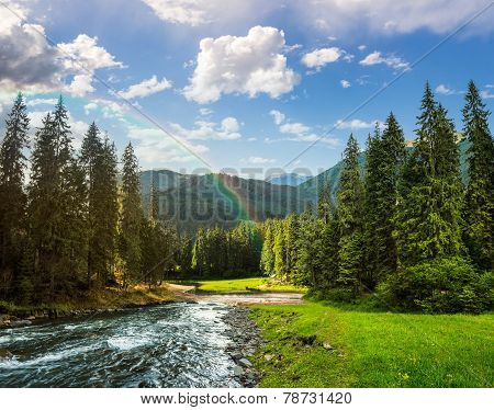 Mountain River In Pine Forest With Rainbow