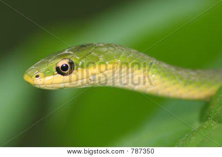 Snake portrait