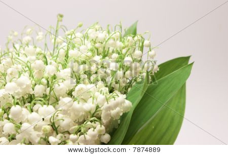 Beautiful fresh Lily-of-the-valley