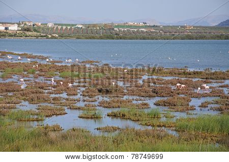 Fuente del Piedra lagoon.