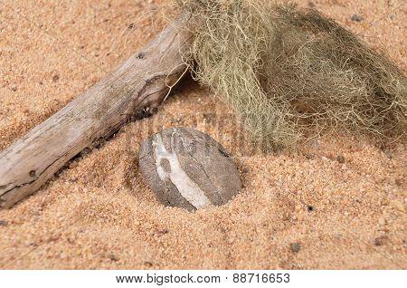 Peeble On Beach