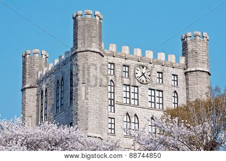 Castle tower with clock over blooming cherry trees