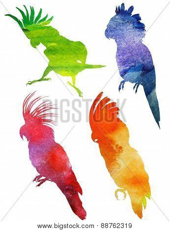 Parrot Silhouette. watercolor vector illustration