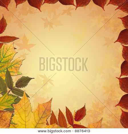 Autumn colored maple leaves