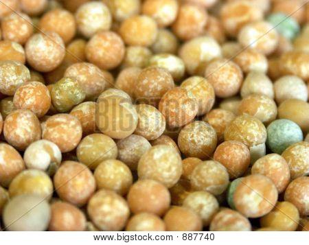 Peas Macro