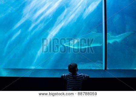 Young man looking at a shark in a tank at the aquarium
