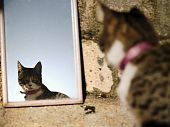 Little female cat watching a mirror, reflected on it poster