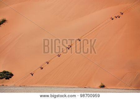 Springbok antilopes on dune of Namib desrt. African wildlife and nature, Namibia