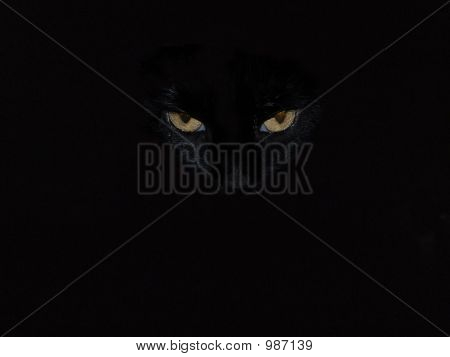 poster of abstract a black cat with amber eyes