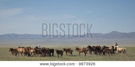 Mongolia Cowboy