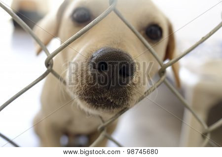 Curious Dog Nose Fence