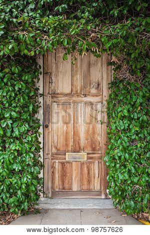 Wooden door with green leaves