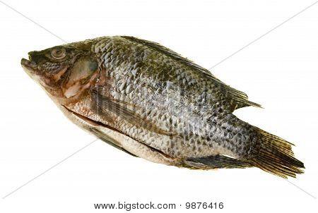 Tilapia Fish Disemboweled