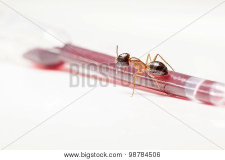Ant On An Pipette